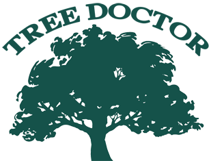 Tree Doctor Tree Services Logo